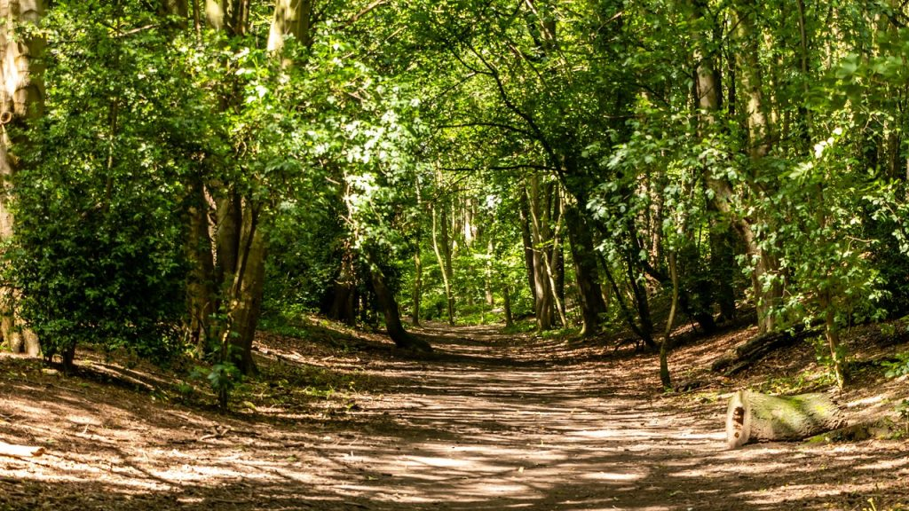 This image has an empty alt attribute; its file name is woodland-walk-7-1024x576.jpg
