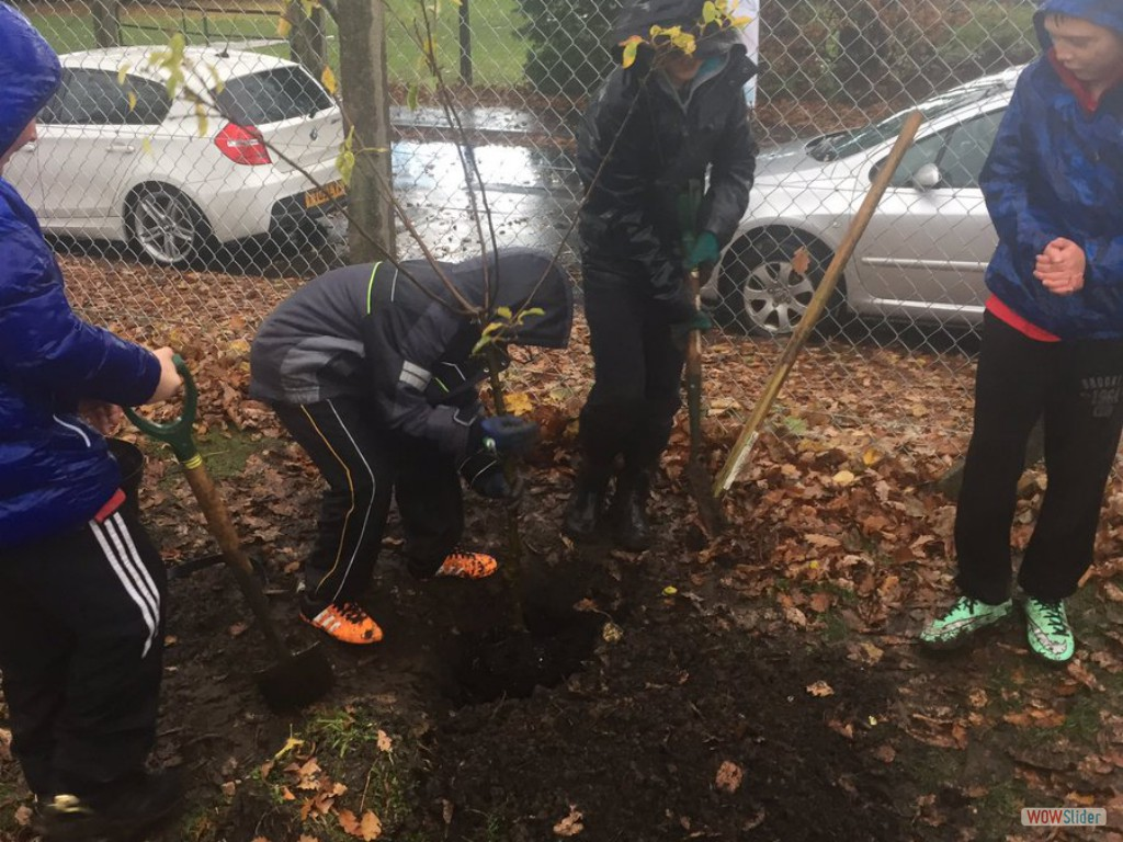We recently planted trees around the school grounds